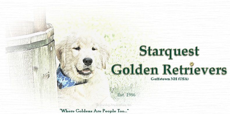 Great Breeder In New Hampshire Golden Retriever Retriever