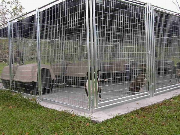 Pitbull Dog Kennels Dimension