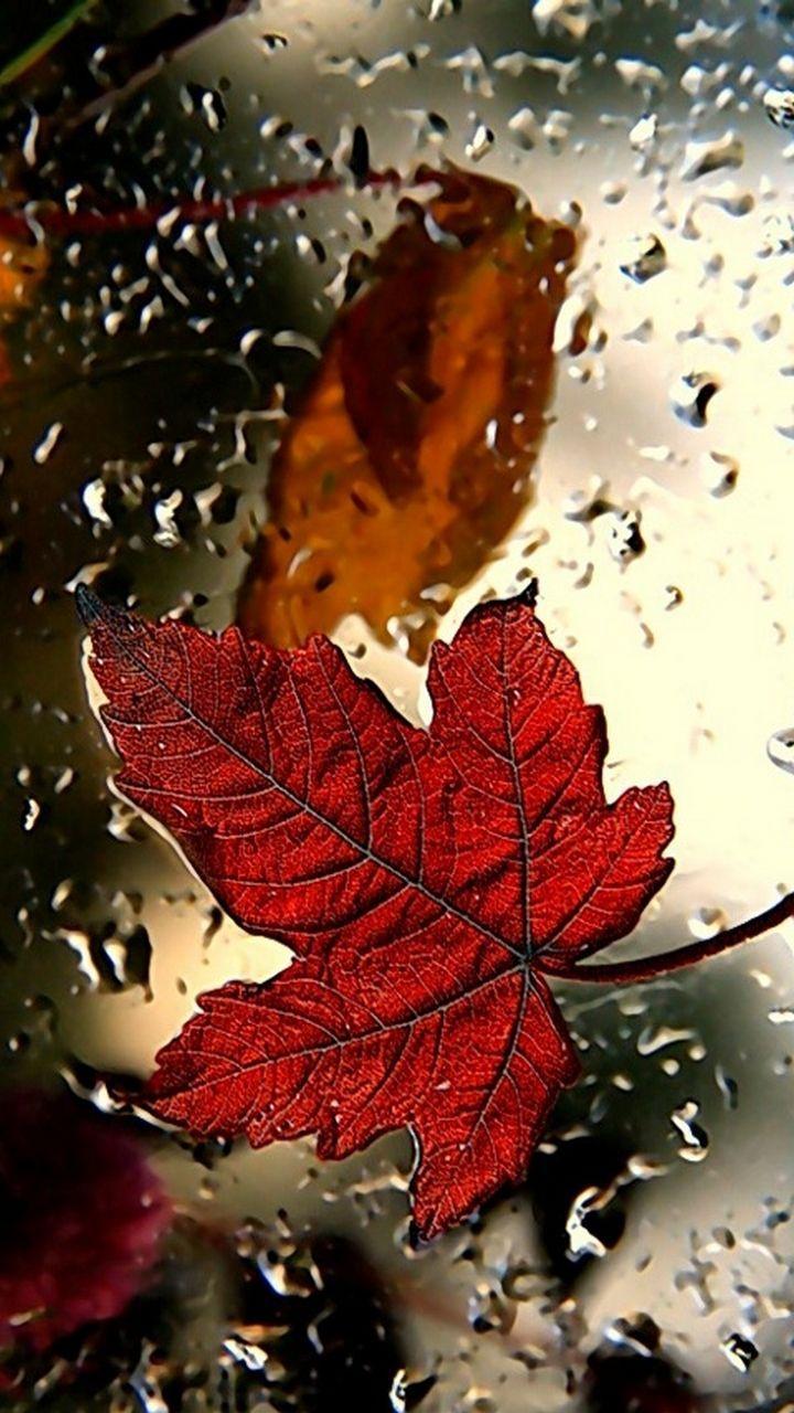 Autumn Fall wallpaper, Rain wallpapers, Red wallpaper