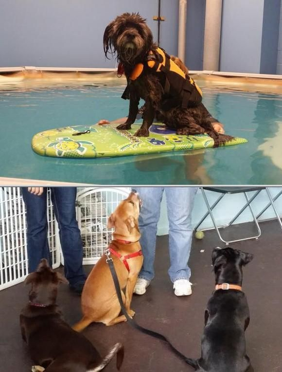Hire Sit Stay Swim With Positive Dog Training Reviews This Canine