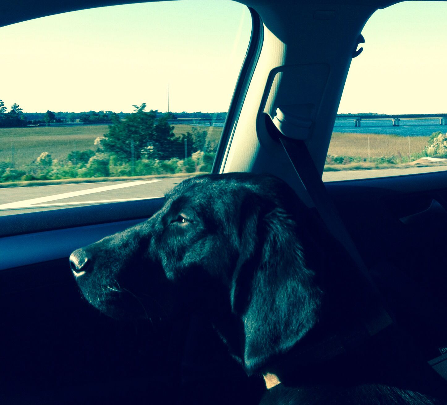 Captain in deep thought #doglife #blacklab #hounddog