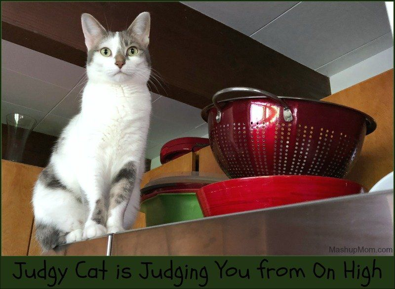 Caturday With The Notorious Bkl And Friends Judgy Cat Is Judging