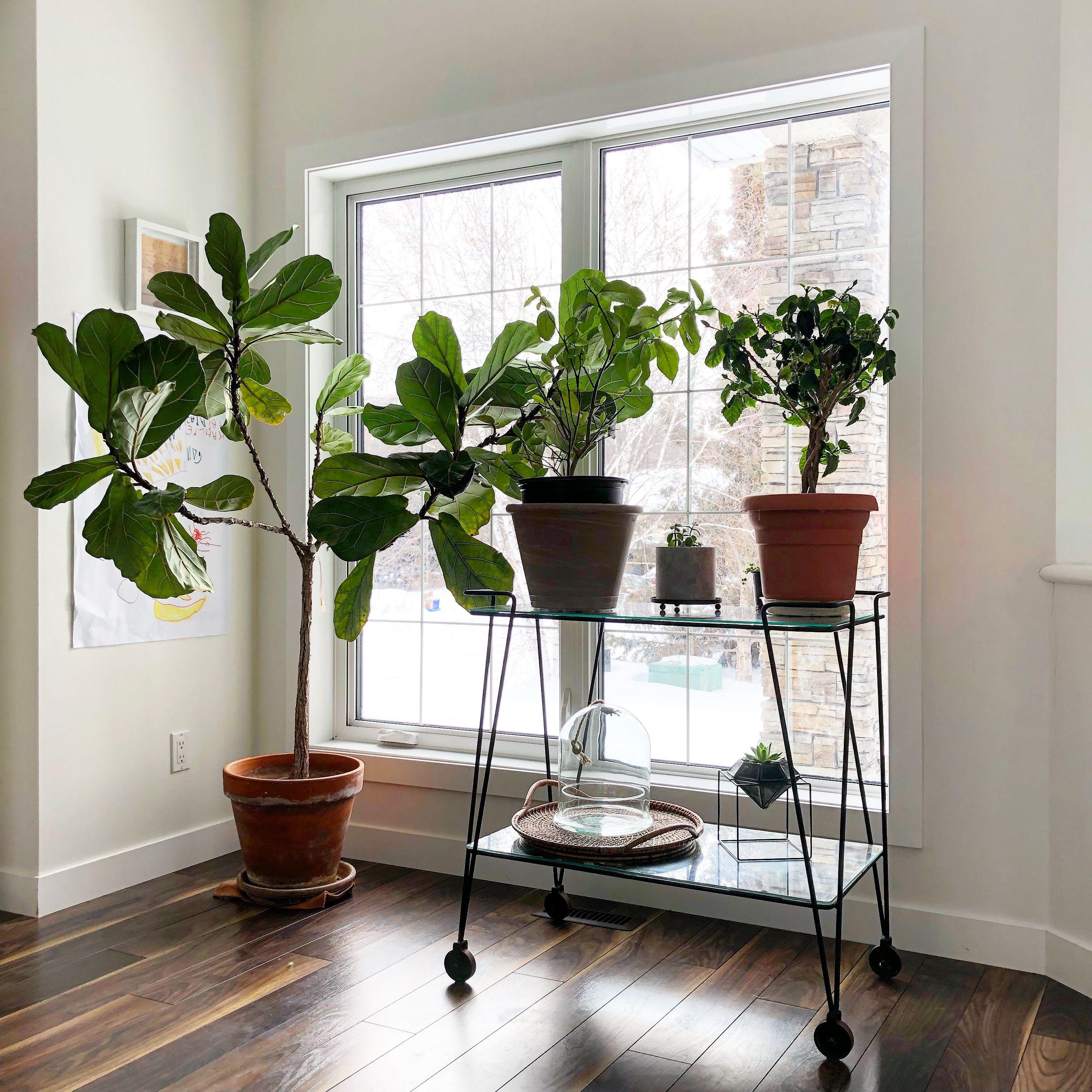 Unique Plant Stands Ideas for Your Home | Plant stand ... on Amazing Plant Stand Ideas  id=68196