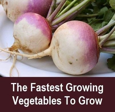 The Fastest Growing Vegetables To Grow Vegetable 400 x 300