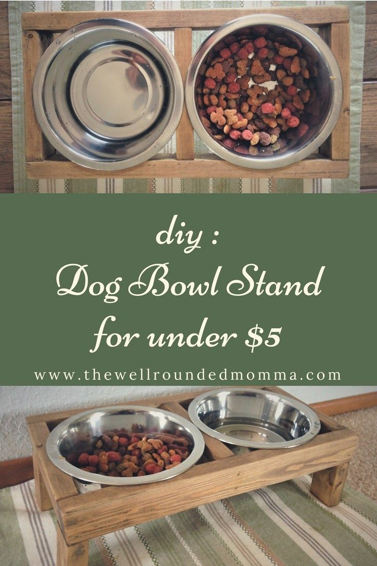 Get Cool DIY Dog from thewellroundedmomma.com