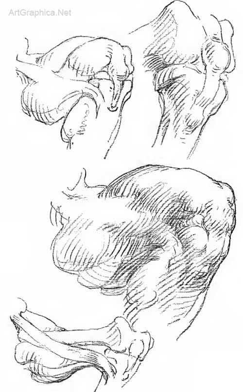 Art Book Constructive Anatomy by George Bridgman | George ...