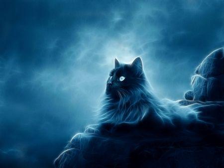 Blue Fantasy Desktop Nexus Wallpapers Cats Animals Cute Cat Wallpaper