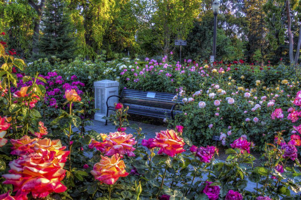 Rose Garden, California State Capitol Park, Sacramento CA ...