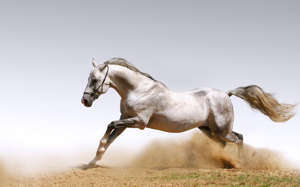 The Crypto Tuber On Twitter Horses Horse Wallpaper Beautiful Horses Beautiful wallpaper desktop horse