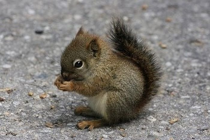 even though squirrels freak me out, i can't help but make an annoying baby sound when i see this picture.