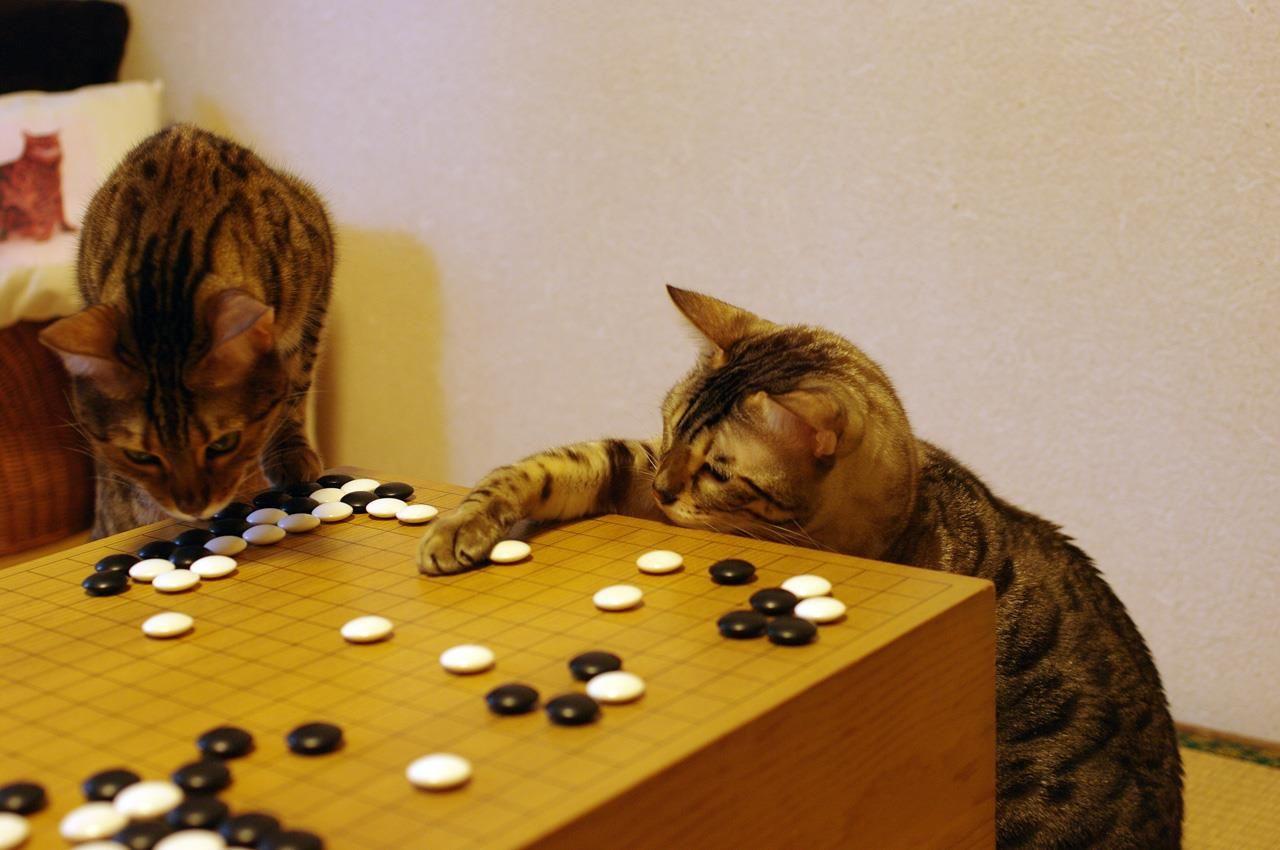 Katzen Games