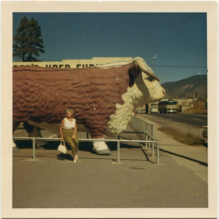 Big ox - somewhere in North America