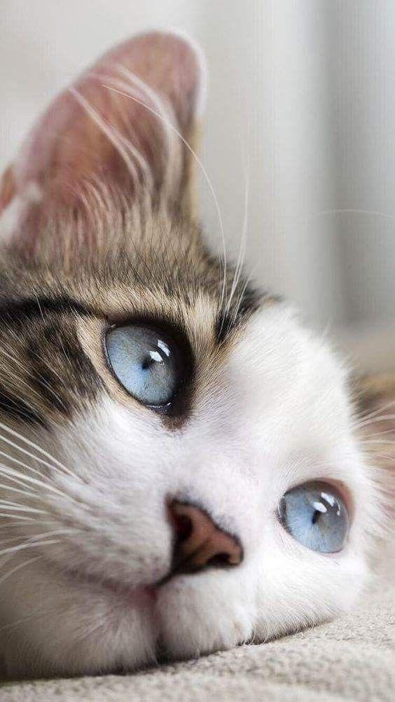 BEBEĞİM NE GÜZELSİN ️ ️ ️NEZ ️ Sevimli kediler, Sevimli
