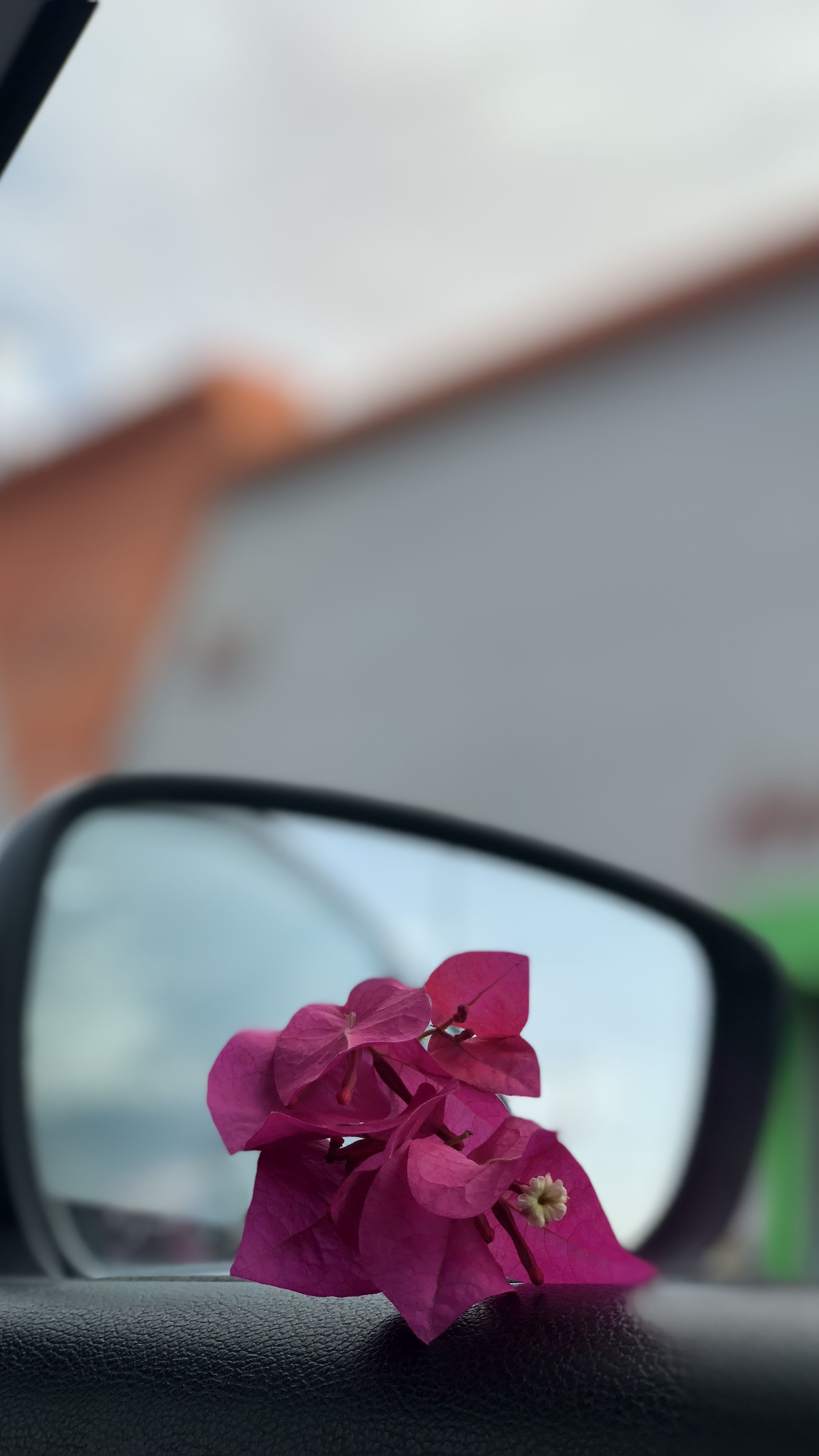 Pin By Lulea On My Photos Flower Aesthetic Rain Photography Nature Photography
