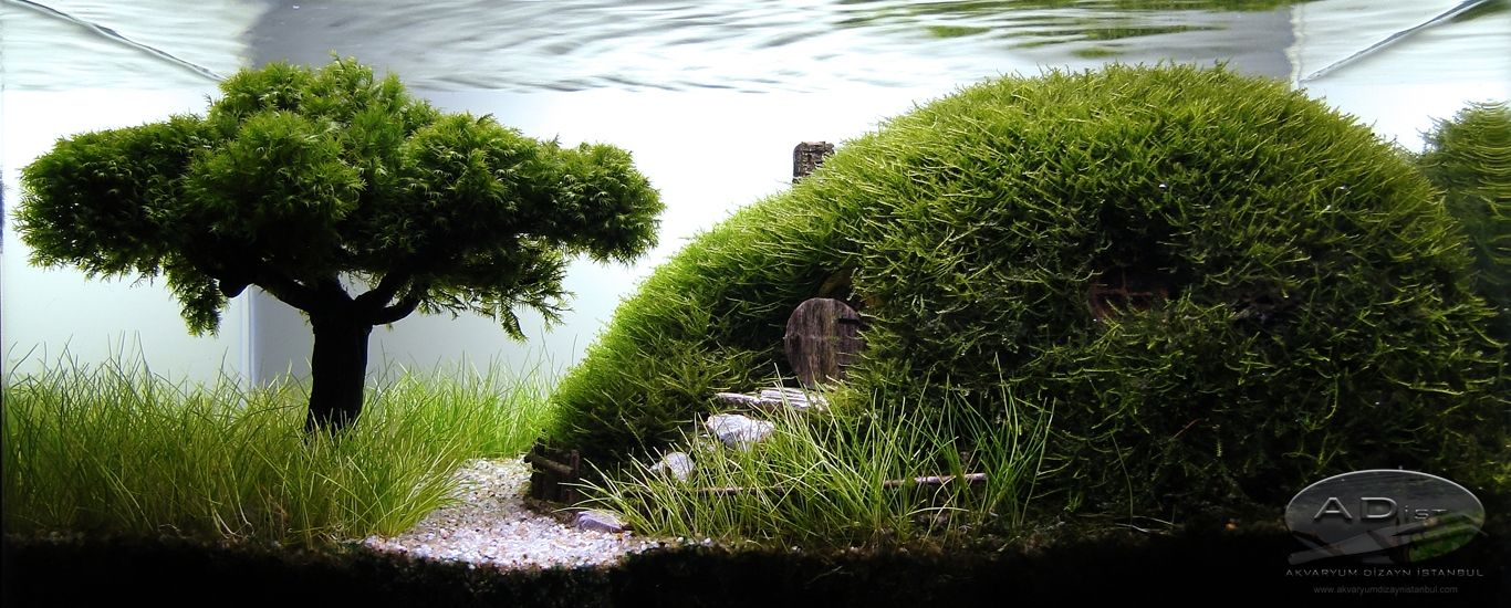 Our Preciousss By Adist Nano Aquariums Aquatic Plant