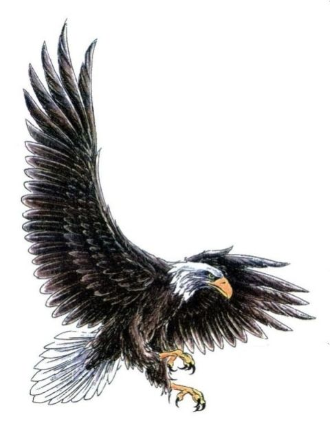 eagle swooping right perspective 480 622 tattoos aguilas pinterest tattoo. Black Bedroom Furniture Sets. Home Design Ideas