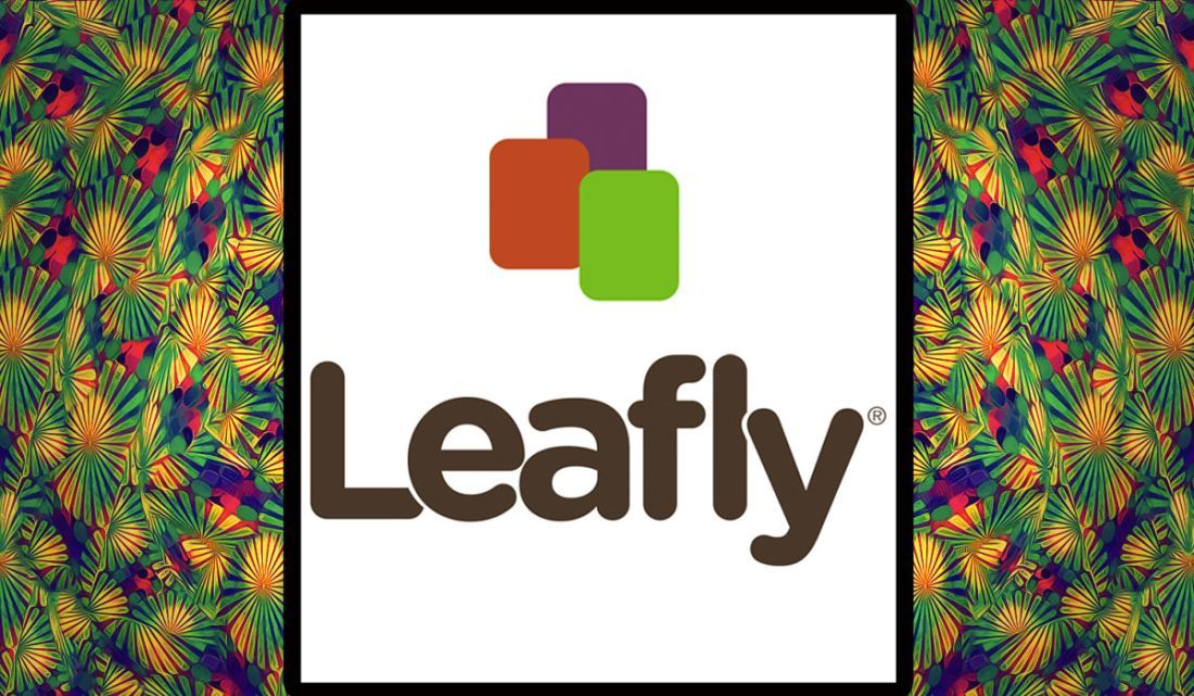 Leafly Twitter accounts to follow, Leafly, Lettering