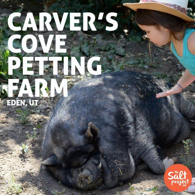 Carver's Cove Petting Farm The Salt Project Things to