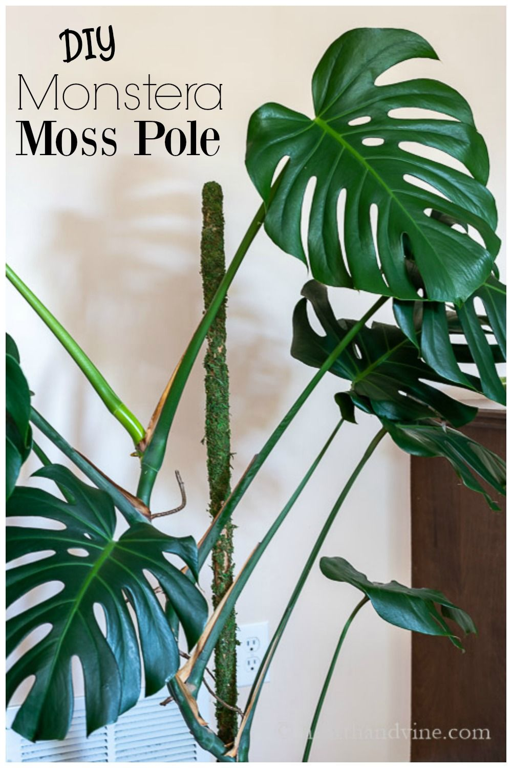 How to make a moss pole for your monstera plant in 2020