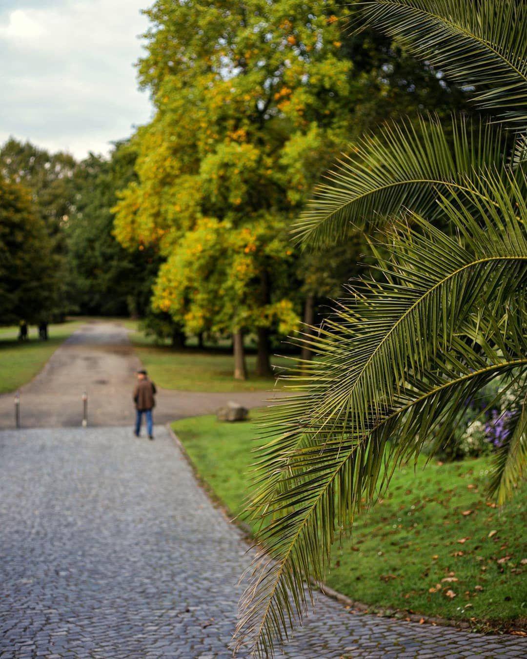 Autumn lights. Kassel, Karlsaue.  Photographer: @salogwyn_fine_Art  #nature #naturelovers #casselfornia #kassel #kasselfornia #wonderful_places #wonderfullife #beautifulnature #beautifullight #motherearth #worldbestshot #seascape #photography #divine_worldplaces #challenge #photooftheday #photoshoot #colorful #gurushotschallenge #gurushots #shotaward #ig_mood #autumn #autumnvibes🍁 #amazing_shots #tree_pictures #tree_magic #tree_love