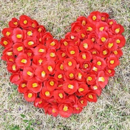 love. Camellia