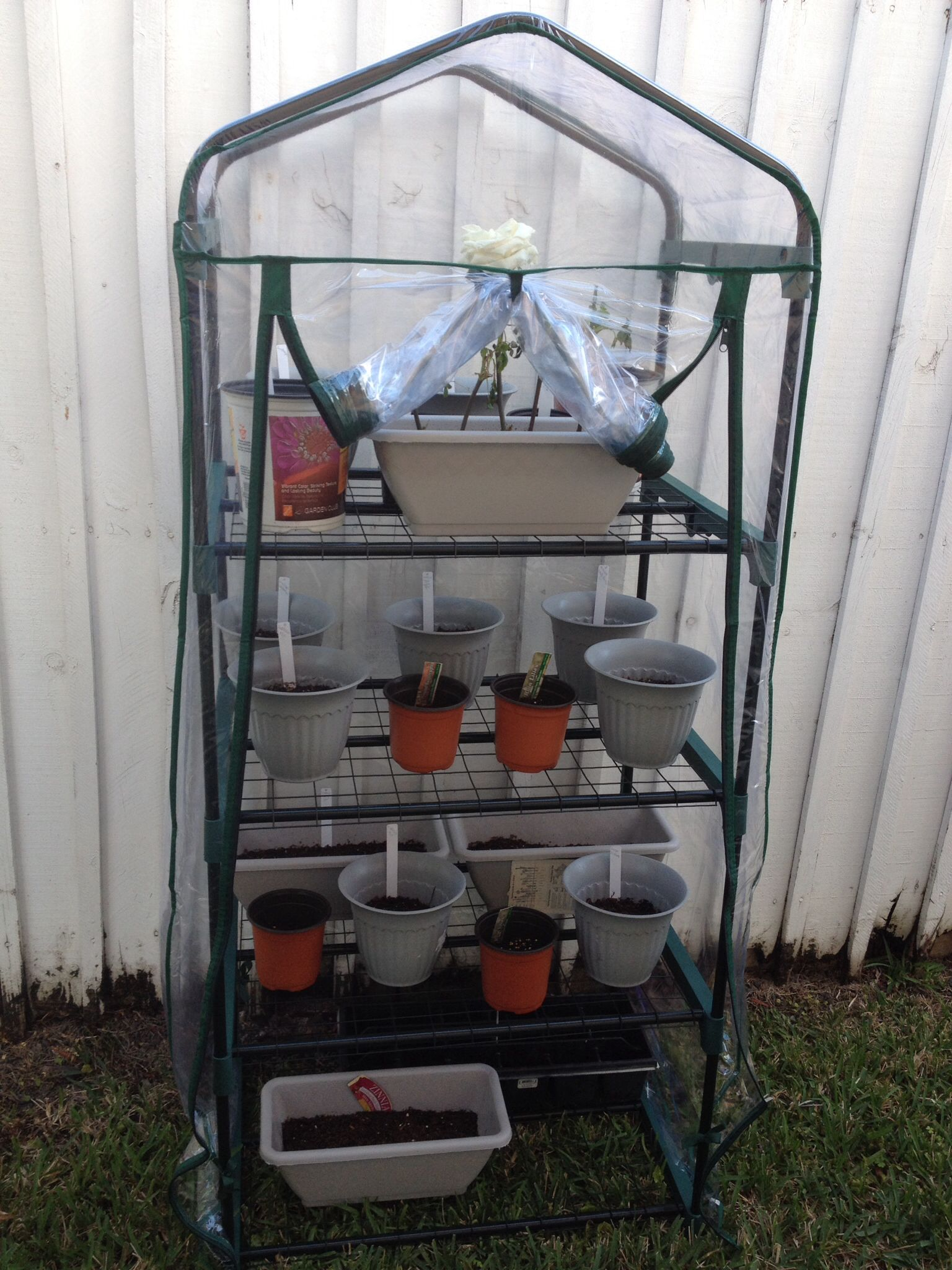 My mini greenhouse big lots 25
