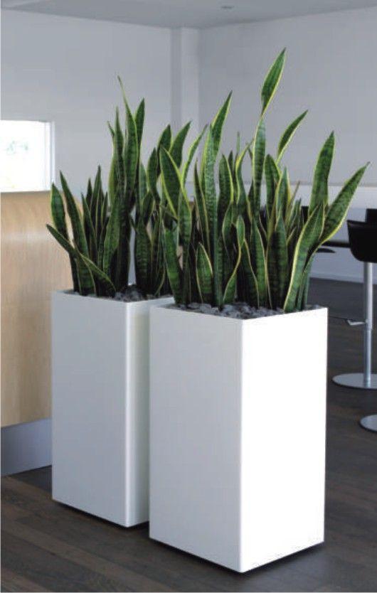 kunststoffgef e f r pflanzen in 2019 beton pflanzen. Black Bedroom Furniture Sets. Home Design Ideas