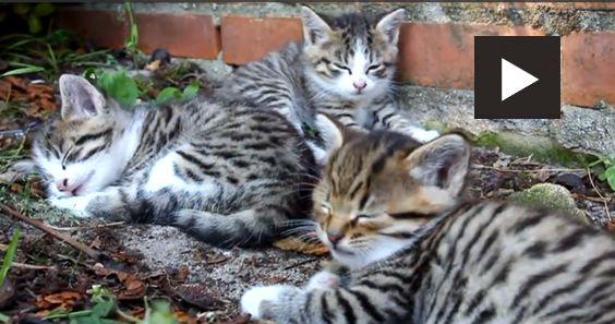 More cute Cats in HD!    #cvotw