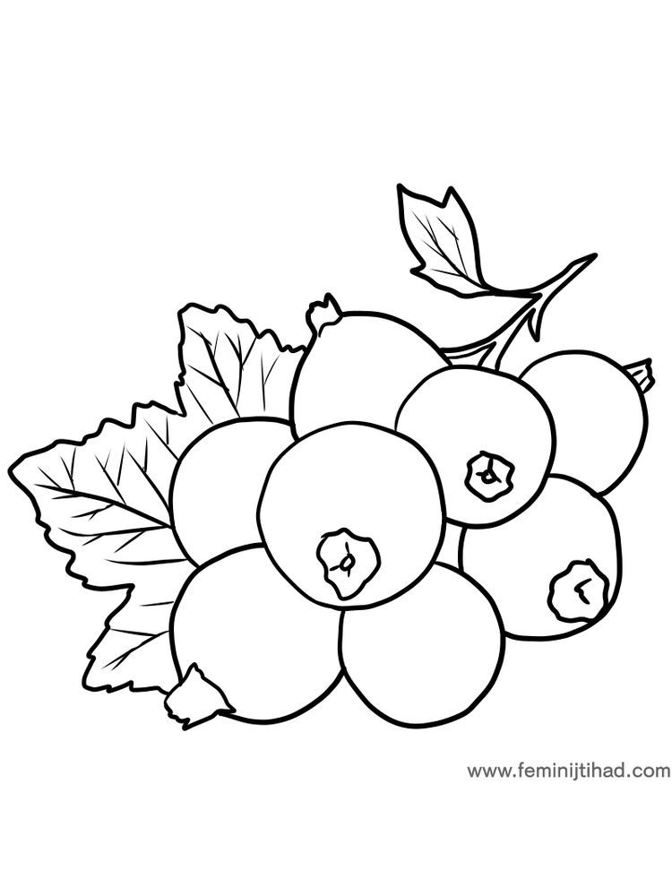 Free Black Currant Coloring Page Download Di 2020