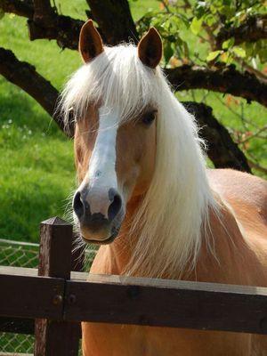 Fotos Pferde In Der Natur I Pferde Schone Pferde Hubsche Pferde