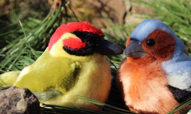Ptaszki z głosami prawdziwych skrzydlaków <3