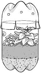 Terrariums are miniature gardens grown inside covered clear containers. Use them as a low-maintenance way to enhance your indoor environment, or as a way to teach kids about the water cycle as they witness the fascinating succession of evaporation, condensation, and precipitation in their mini-environment.