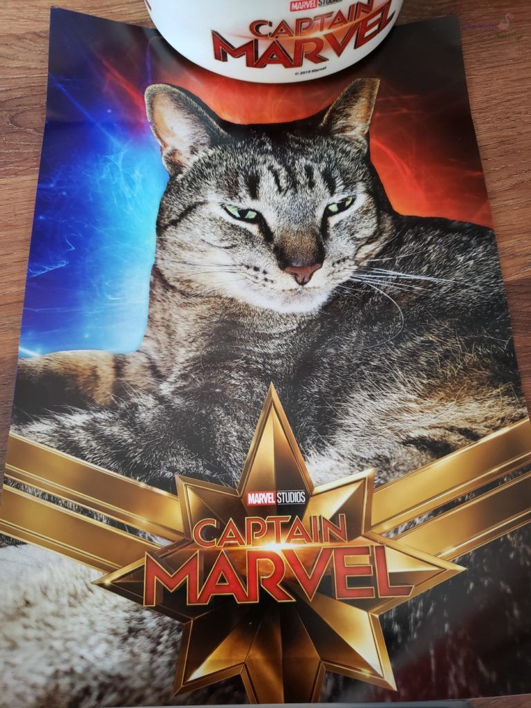 Captain MarvelNational Hug Your Cat Day Life With Kathy