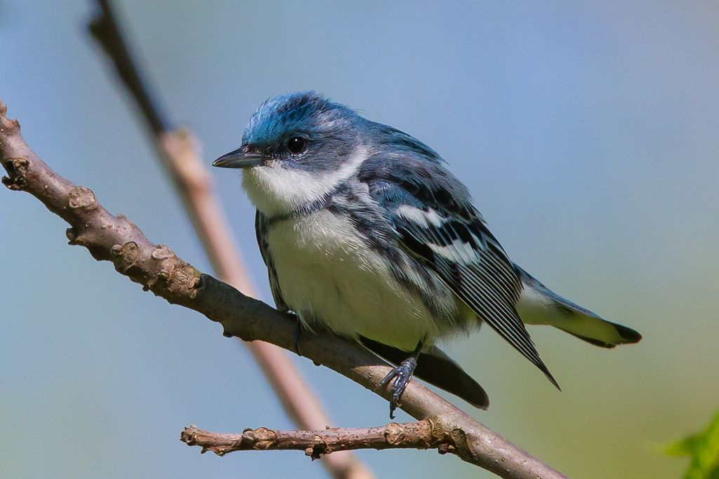Spring Migration--The Most Wonderful Time of the Year!!! - FM Forums