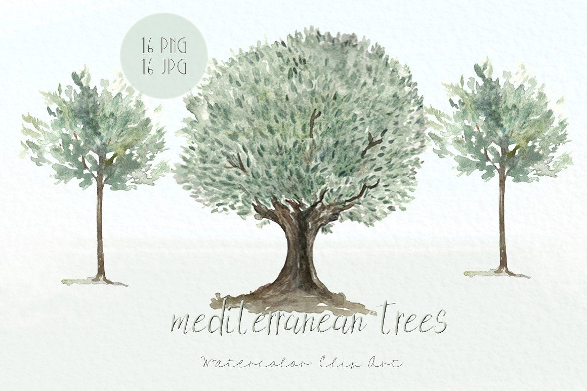 Trees mediterranean clip art by LABFcreations on @creativemarket ...