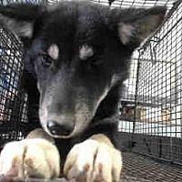 Adopt A Pet Urgent On 12 6 San Bernardino San Bernardino Ca