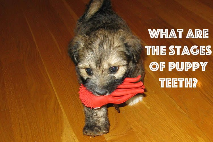 Did You Know That You Can Tell A Dog S Age From Their Teeth