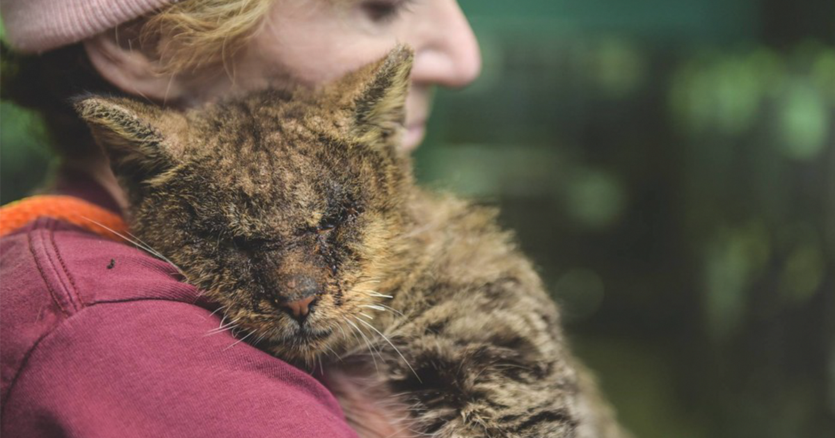 Cat No One Dared To Touch Finally Found A Human Who Hugged Him -   Valentino was the unfortunate cat no human would touch, and for many reasons. The kitty's fur was hardened and riddled with grime. His eyes were s... See more at https://www.icetrend.com/cat-no-one-dared-to-touch-finally-found-a-human-who-hugged-him/