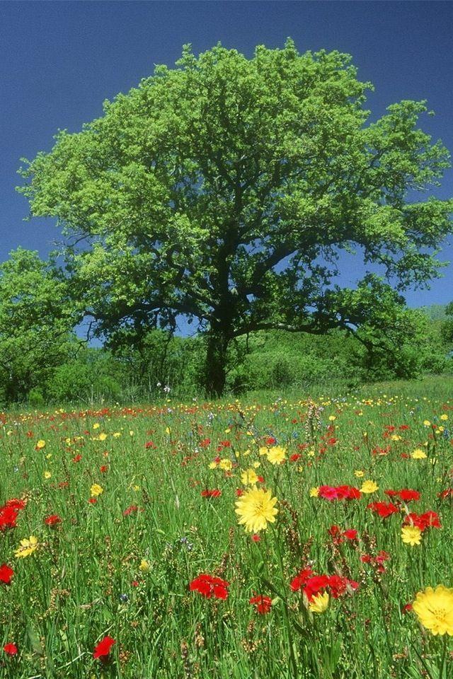 El paisaje campirano tiene abundancia de colores básicos. #Inspiración