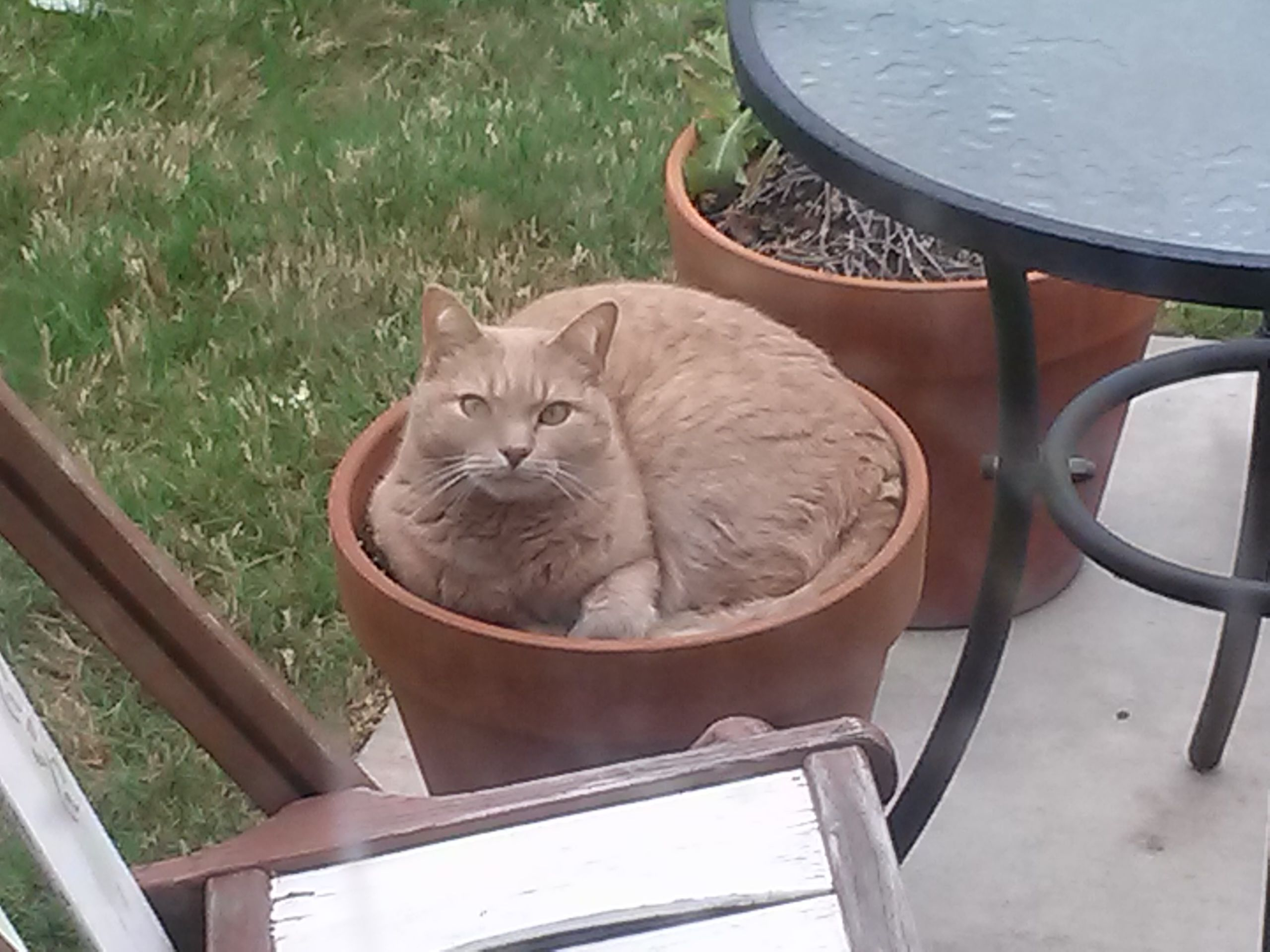 He sprouted after our first spring rain