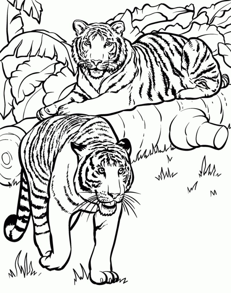 realistic and detailed coloring page of tiger for older kids - Intricate Coloring Pages Kids