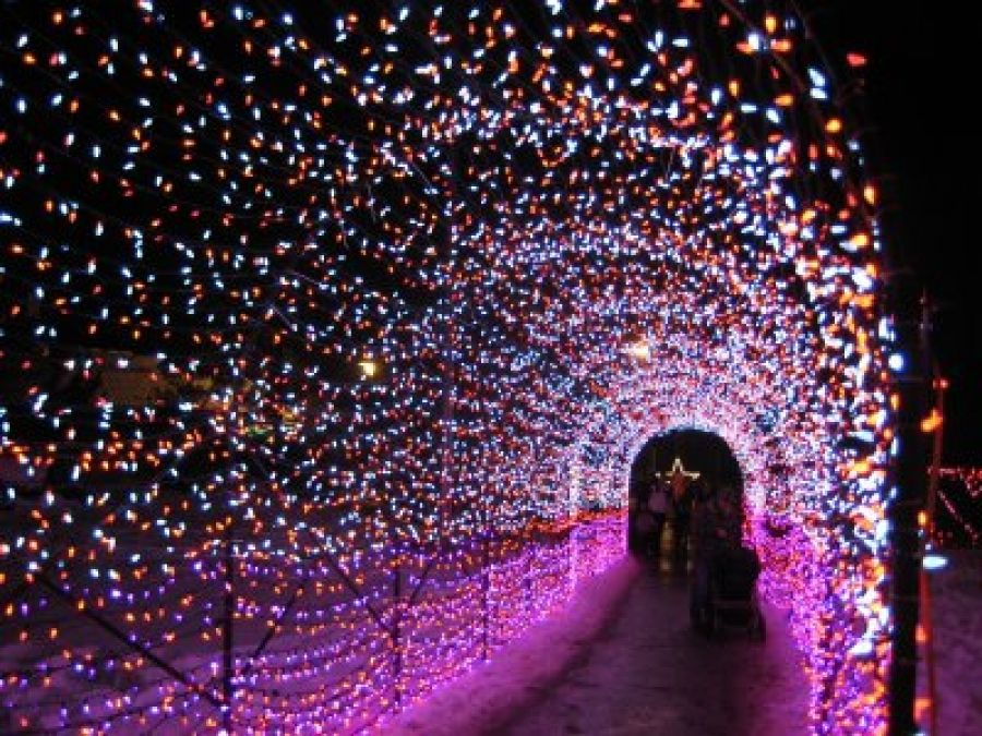 32 best Place to have Fun images on Pinterest | Zoo lights ...