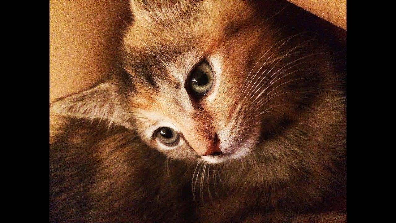 Scared Kitten Relaxes How To Socialize A Feral Kitten Youtube Feral Kittens Kitten Love Baby Cats