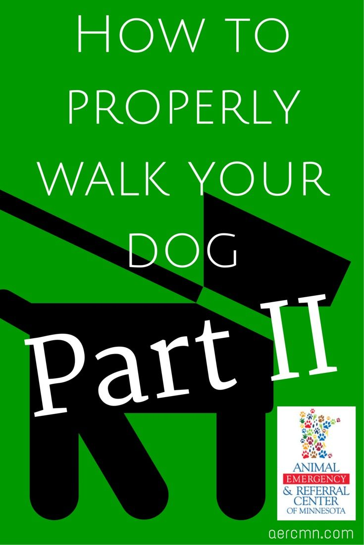 Walking Your Dog Part Two With Images Your Dog Emergency Vet