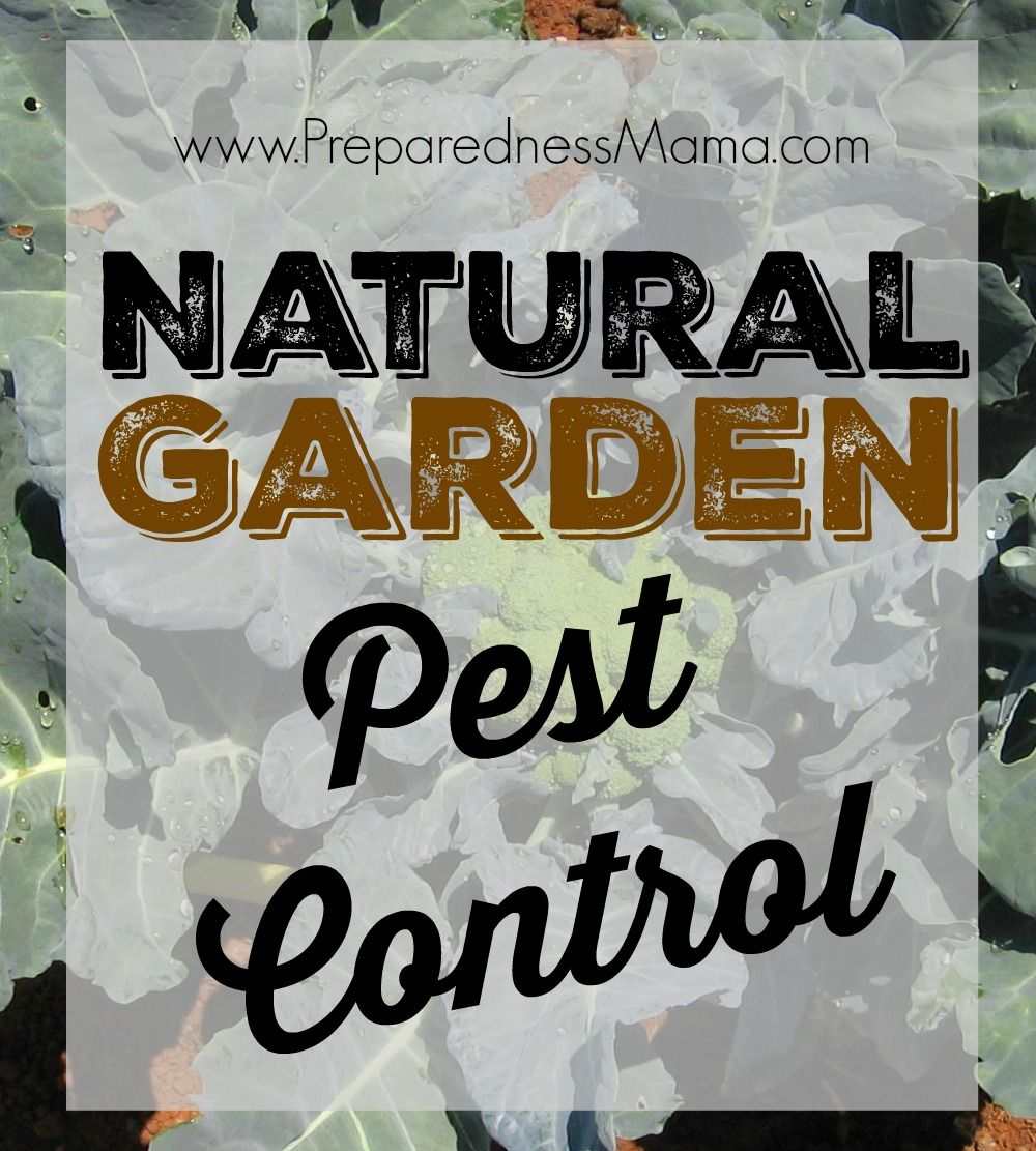 Natural Garden Pest Control Is Possible If You Will Employ Certain Tactics  To Keep Pests Out