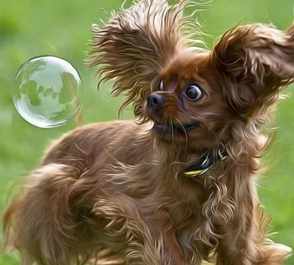 #Dogs #Love #Bubbles