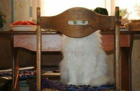 Hiding - your doing it right!!