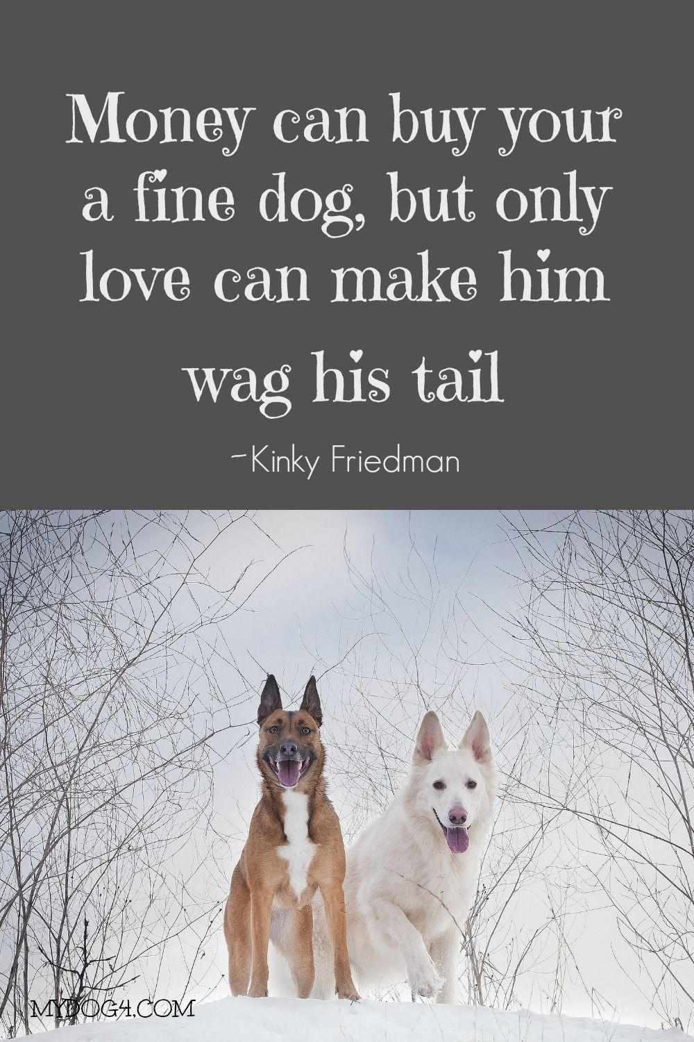Dog Quote Dog Quotes Dog Quotes Love Big Dog Little Dog