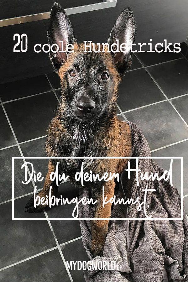 Photo of Dog Tricks Tips-Teach Dog Tricks