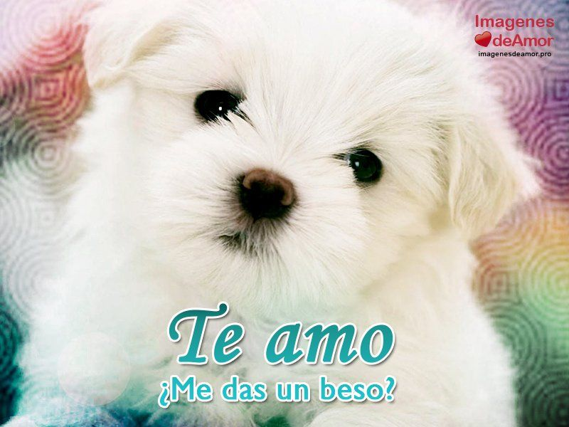 15 Imagenes De Perritos Con Frases De Amor Super Tiernas